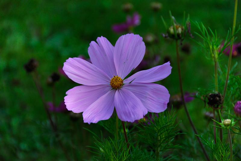 Blume - ohne Vignettierung